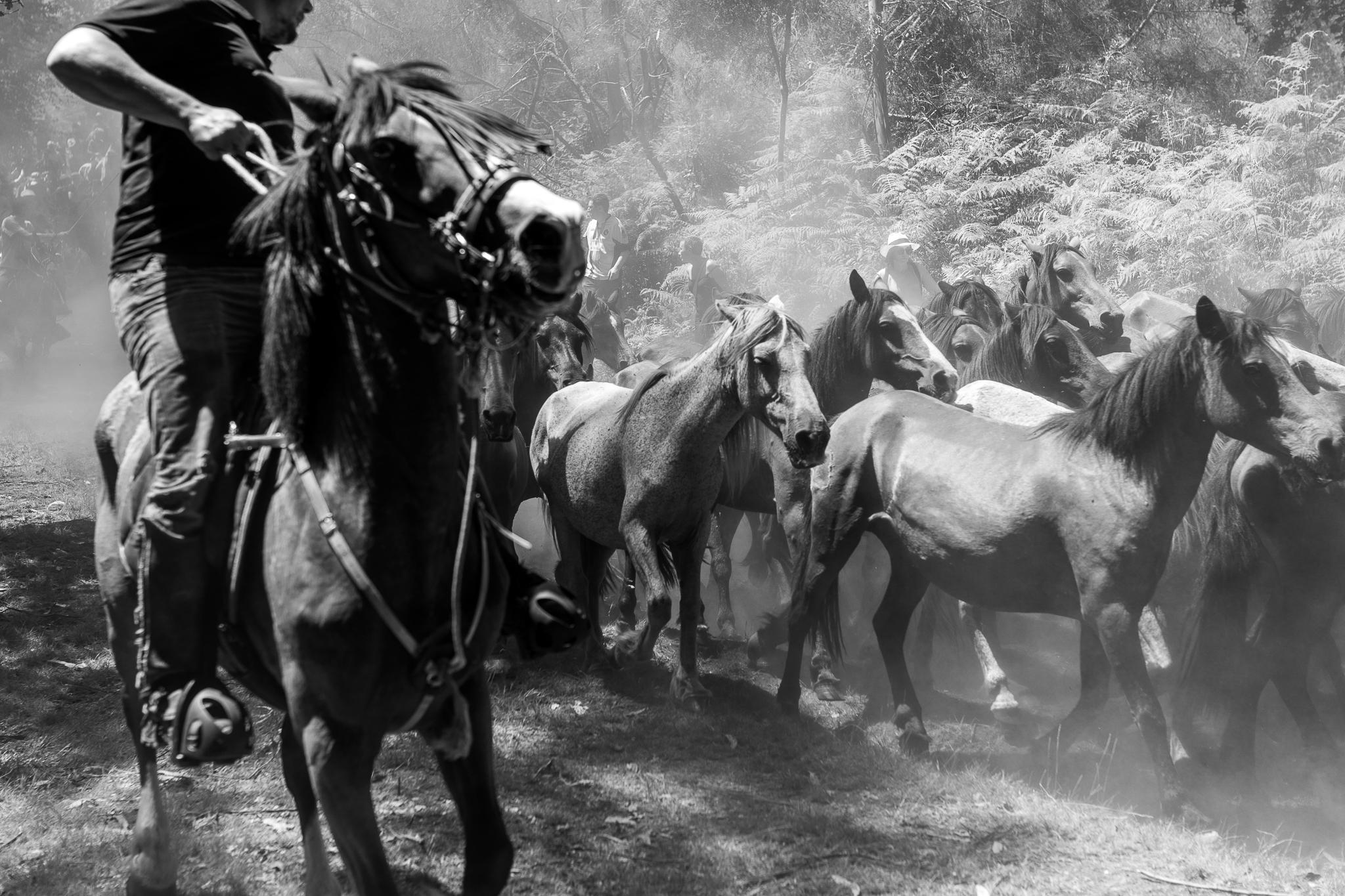 La Rapa das Bestas de Sabucedo, localidad perteneciente al municipio de A Estrada, Pontevedra, se celebra cada año durante el primer viernes, sábado, domingo y lunes del mes de Julio. <br>La celebración consiste en bajar de los montes a las manadas de caballos salvajes para posteriormente meterlos en el curro, raparlos, desparasitarlos y marcarlos. <br>La bajada se lleva a cabo gracias a los vecinos de Sabucedo y a todos los innumerables colaboradores, mientras que cuando los animales se encuentran en el curro son solamente los aloitadores quienes con su valentía y destreza han de enfrentarse a las manadas de caballos salvajes y a sus garañones.