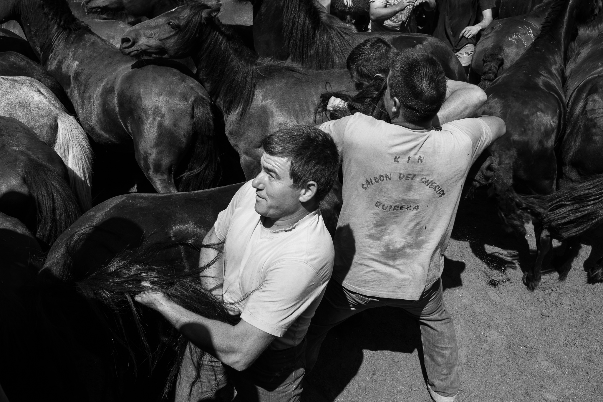 The Rapa das Bestas de Sabucedo, a town belonging to the municipality of La Estrada, Pontevedra, is celebrated every year during the first Friday, Saturday, Sunday and Monday of July. <br> The celebration consists of descending the herds of wild horses from the Galician mountains and later to put them in the 'curro', to cut off their mane and tail, to get rid of parasites and to mark them. <br> The descent takes place thanks to the neighbors of Sabucedo and all the incountable collaborators. However, when the animals are in the curro only the aloitadores face the herds of wild horses and stallions with their bravery and dexterity.