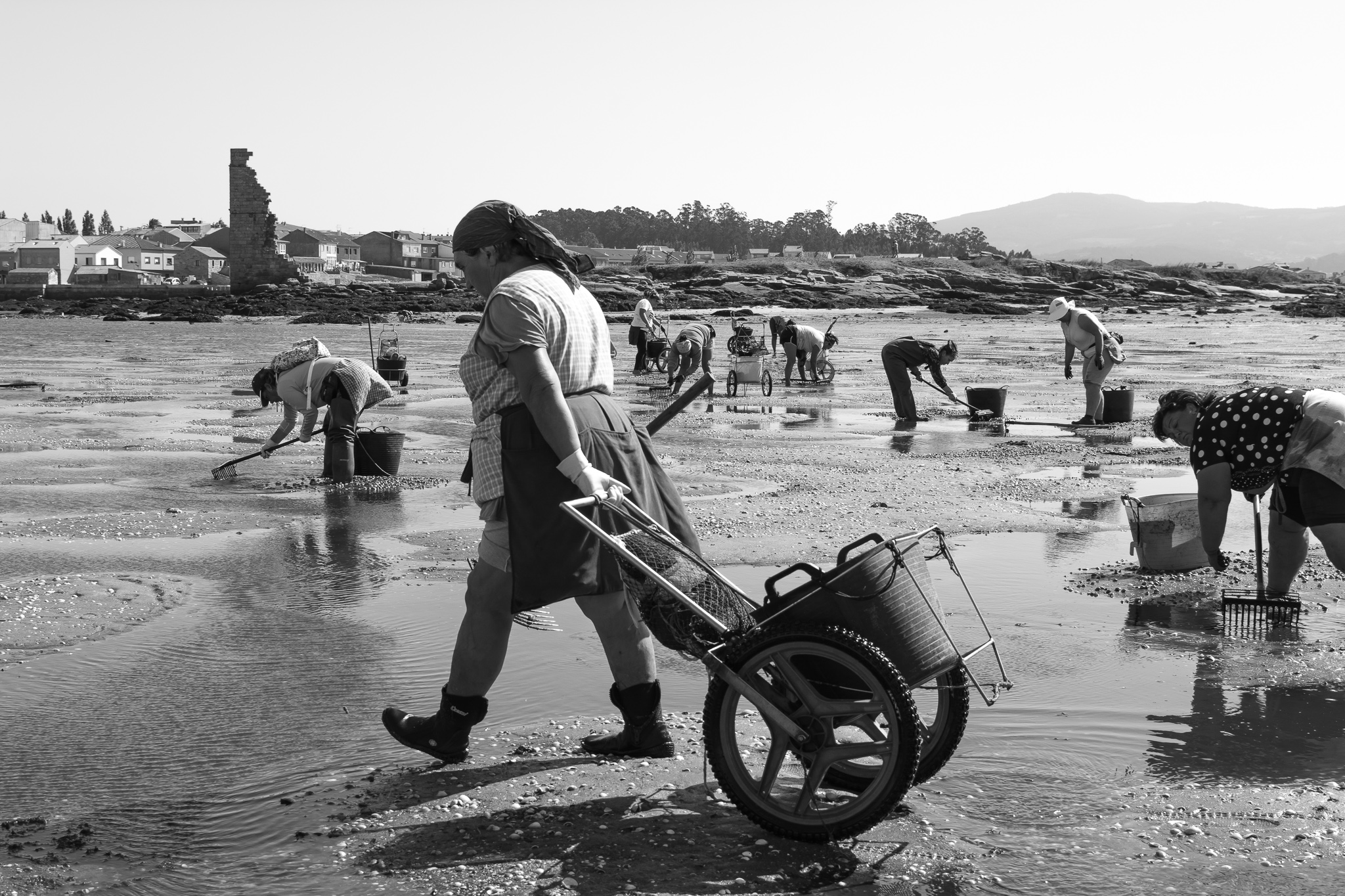 After the biological rest period where the clam, grooved carpet shell and japonese carpet shell, and the cockle pursue their reproduction and growth, the mariscadoras go to the estuary to fish when the tide allows it. <br> This old profession of the Galician coast resists, although every day with more difficulties, thanks to the different associations and the strength of these women who, provided with their typical working equipment, continue with the tradition.