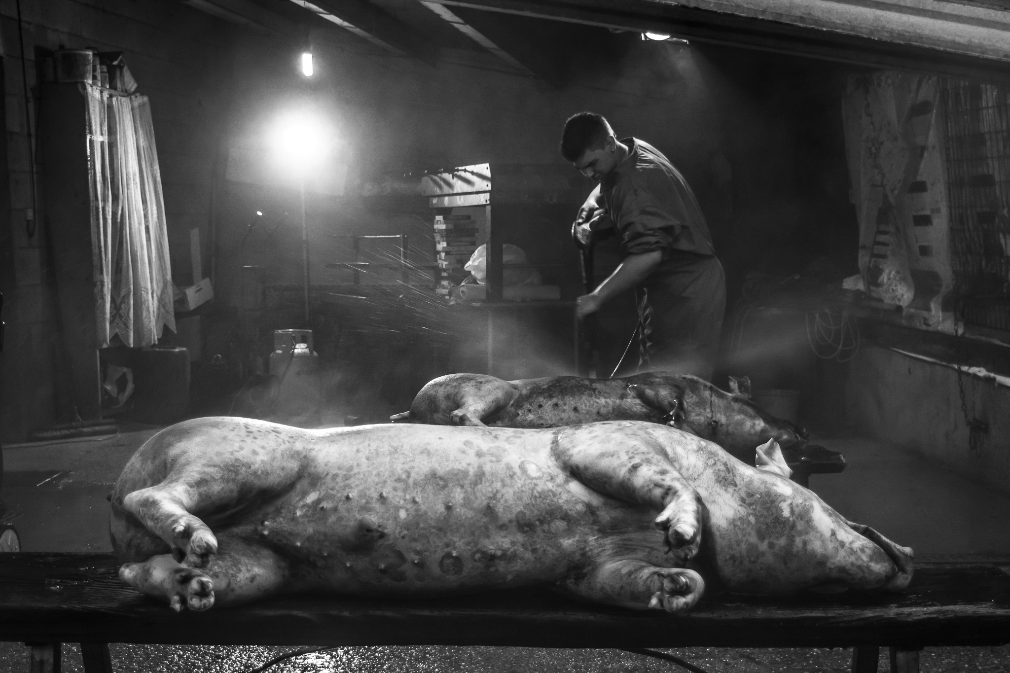 The slaughter is the annual sacrifice of one or more pigs as a popular custom and as a form of supply for the families that inhabit the different villages.<br> It is usually done at the door of the house or yard, a few meters from the stable where the animals were fed for months.