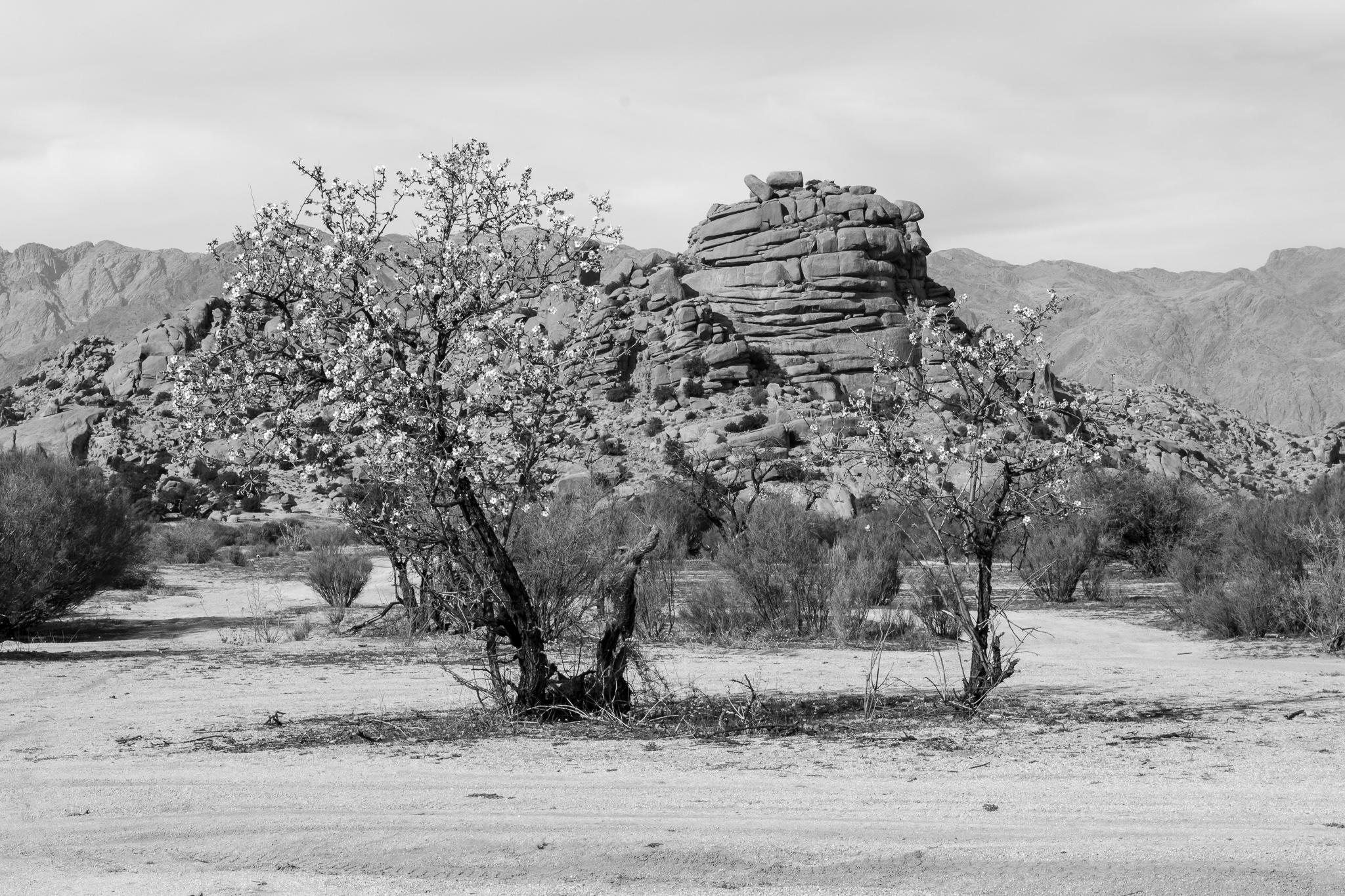 A poucos quilómetros do pequeno pobo de Tafraoute e situado a 1000 metros de altitude atopamos o Val de Ameln.  <br>O val, no que se atopa a roca granítica 'Sombreiro de Napoleón', destaca pola súa cantidade de árbores de argán, aínda que entre primavera e inverno tamén permite ver o espectáculo da floración dos seus almendros.
